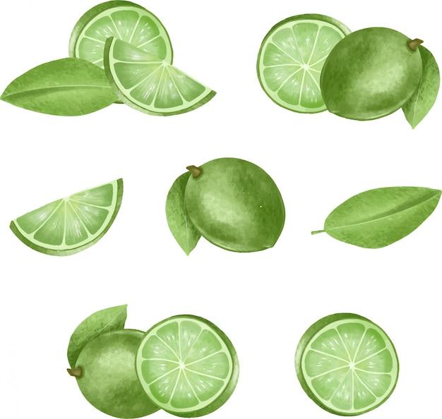 Ensemble d'illustration de limes isolés dessinés à la main
