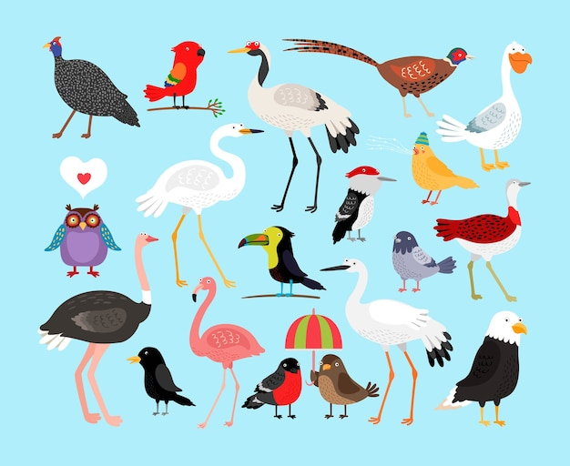 Ensemble d'illustration d'oiseaux mignons