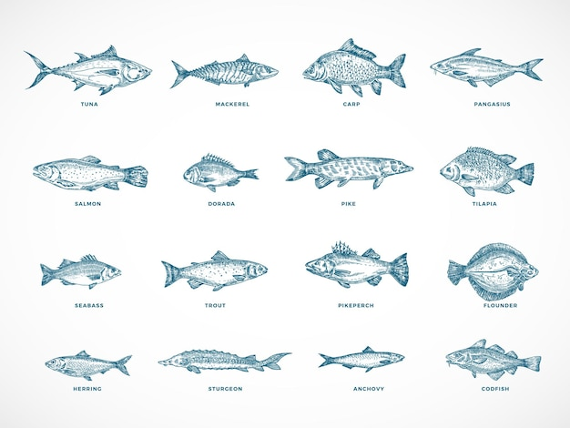 Ensemble d'illustration de poisson océan ou mer et rivière dessinés à la main.