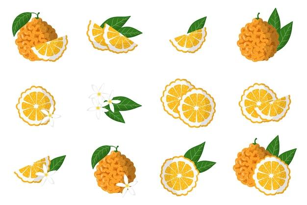 Ensemble d'illustrations avec des agrumes exotiques orange amère, des fleurs et des feuilles isolées sur fond blanc.