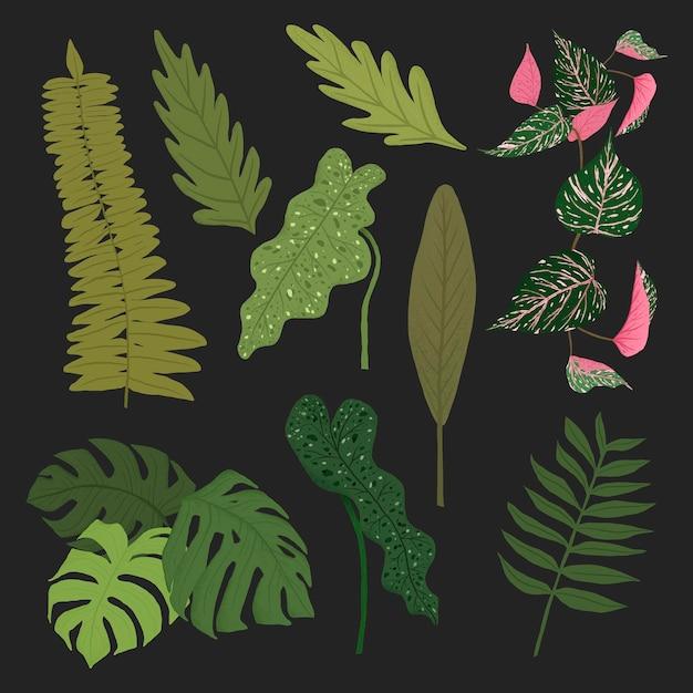 Ensemble d'illustrations botaniques végétales vectorielles à feuilles tropicales