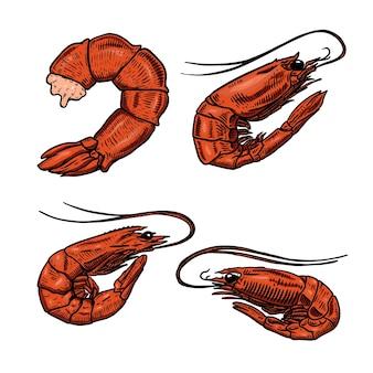 Ensemble d'illustrations de crevettes sur fond blanc. élément de design pour affiche, merde, carte, emblème, signe, badge. illustration vectorielle