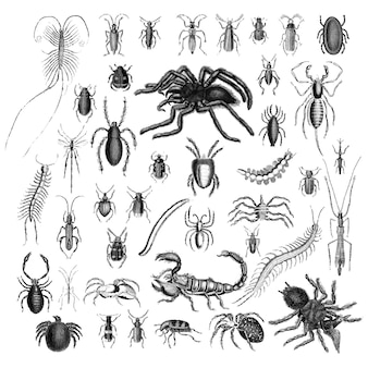 Ensemble d'illustrations de divers insectes