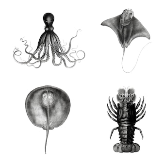 Ensemble d'illustrations d'espèces de la vie marine