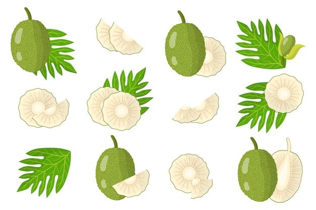 Ensemble d'illustrations avec des fruits exotiques de l'arbre à pain, des fleurs et des feuilles isolés sur fond blanc.