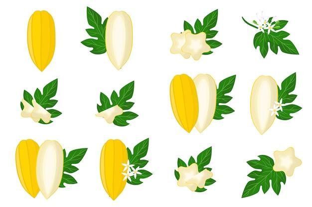Ensemble d'illustrations avec des fruits exotiques babaco, des fleurs et des feuilles isolés sur fond blanc.