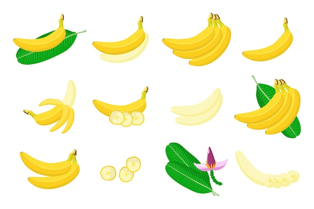 Ensemble d'illustrations avec des fruits exotiques de banane, des fleurs et des feuilles isolés sur fond blanc.