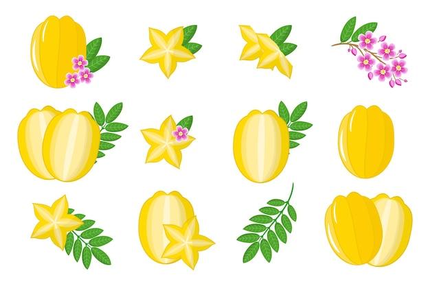 Ensemble d'illustrations avec des fruits exotiques carambola, des fleurs et des feuilles isolés sur fond blanc.