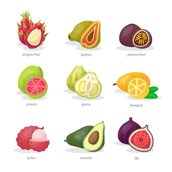 Ensemble d'illustrations de fruits exotiques