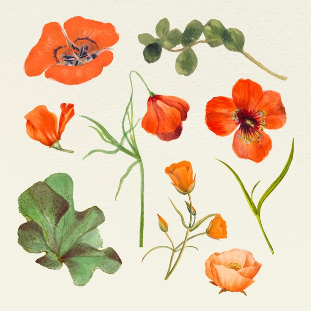 Ensemble d'illustrations de nom de fleur d'été vintage, remixé à partir d'œuvres d'art du domaine public