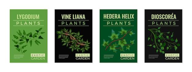 Ensemble d'illustrations de plantes exotiques
