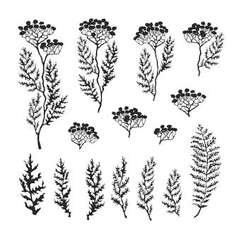 Ensemble d'illustrations vectorielles en noir et blanc d'herbes, plantes et fleurs