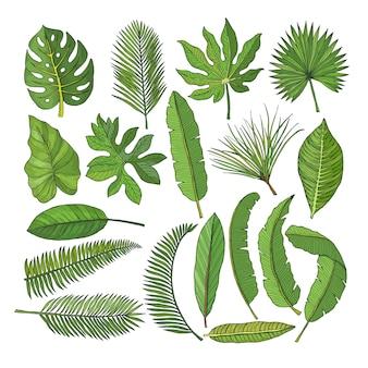 Ensemble d'images colorées de feuilles tropicales. illustrations vectorielles isolées sur blanc