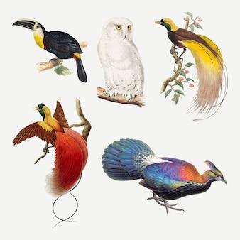 Ensemble d'impression d'art animalier de vecteur d'oiseau vintage, remixé à partir de la collection du domaine public