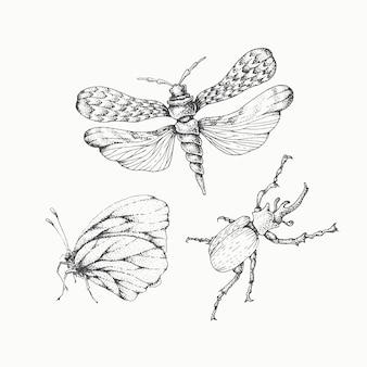 Ensemble d'insectes dessinés à la main, éléments monochromatiques vectoriels isolés.