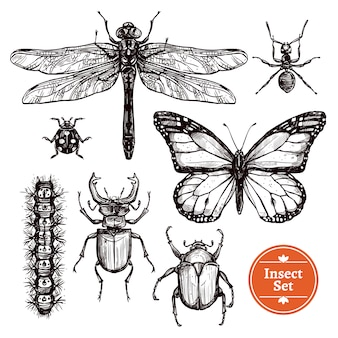 Ensemble d'insectes dessinés à la main