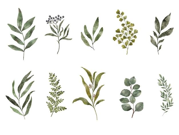 Ensemble isolé de feuilles et de branches aquarelle