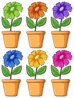 Ensemble isolé de fleurs de différentes couleurs