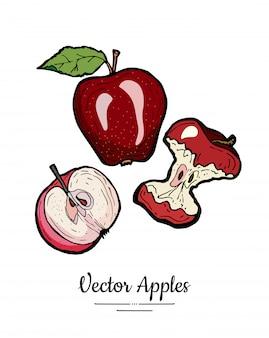 Ensemble isolé de vecteur de pommes. feuilles de pommes entières à moitié coupées. illustration de fruits rouges dessinés à la main.