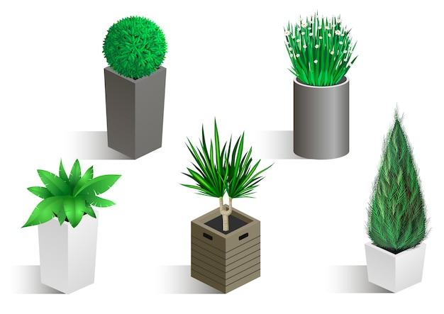 Ensemble isométrique de différentes plantes