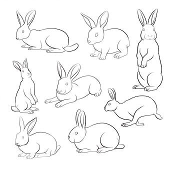 Ensemble de lapin dessiné à la main