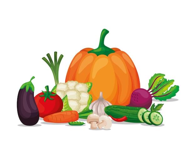 Ensemble de légumes collection de jeu de légumes isolé sur fond blanc. illustration vectorielle