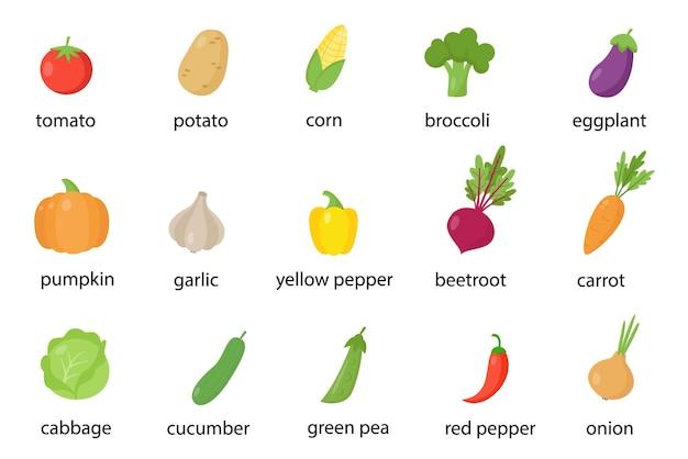Ensemble de légumes colorés nommés en anglais. recueil d'illustrations.