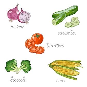 Ensemble de légumes isolés dessinés à la main