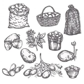 Ensemble de légumes pomme de terre croquis dessinés à la main