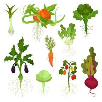 Ensemble de légumes avec des racines. alimentation saine. nourriture naturelle. produits de jardin frais. plantes comestibles