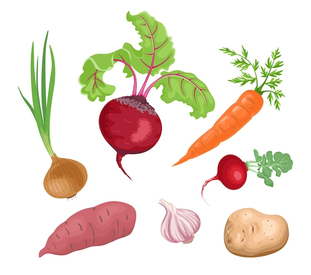 Ensemble de légumes racines.