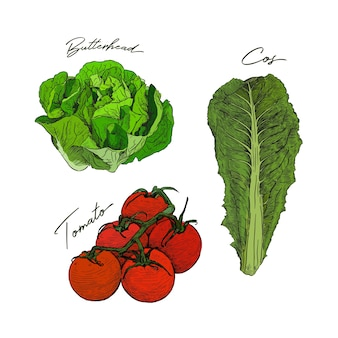 Ensemble de légumes style croquis dessinés à la main