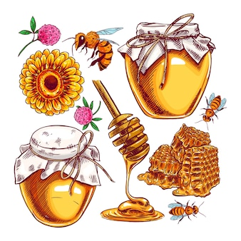 Ensemble de miel mignon. pots de miel, abeilles un nid d'abeille.