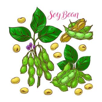 Ensemble mignon de graines de soja. illustration dessinée à la main