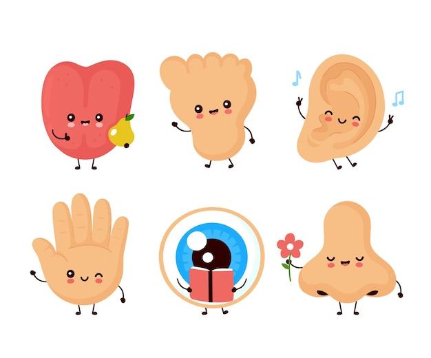 Ensemble, de, mignon, humain, sens, organe, isolé, blanc
