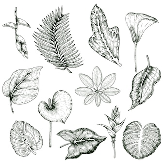 Ensemble monochrome de plantes tropicales dessinées à la main