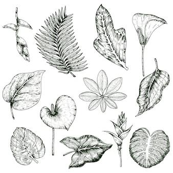 Ensemble monochrome de plantes tropicales dessinées à la main