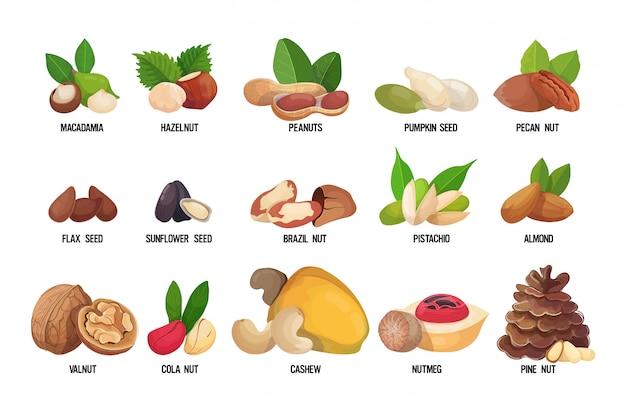 Ensemble de noix et graines nommées isolés