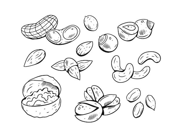 Ensemble de noix isolé sur blanc