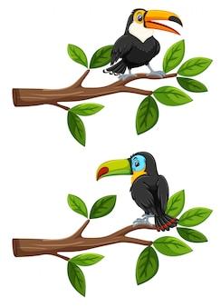 Ensemble d'oiseaux sur les branches