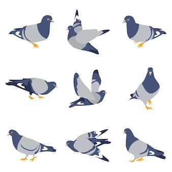 Ensemble d'oiseaux de dessin animé de pigeons isolé