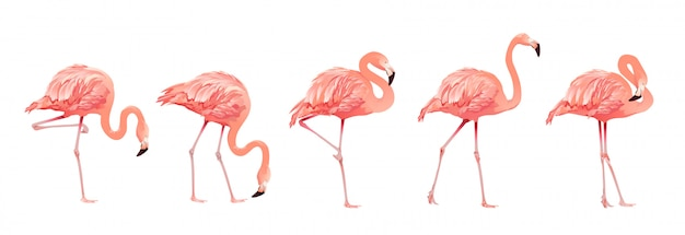 Ensemble d'oiseaux flamants roses