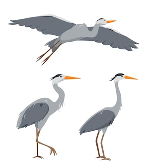 Ensemble d'oiseaux hérons dans des poses différentes isolé sur blanc