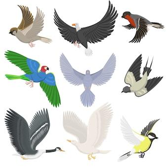 Ensemble d'oiseaux volants sauvages différentes ailes dessin animé mignon faune plume vol silhouette animale. concept naturel de liberté de printemps