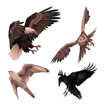 Ensemble d'oiseaux