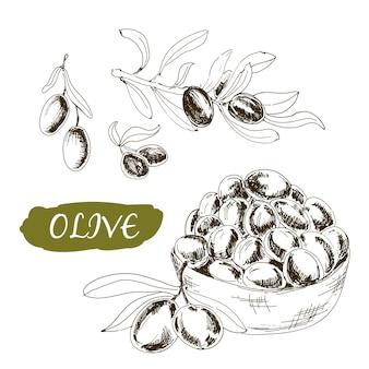 Ensemble d'olives dans le style de gravure