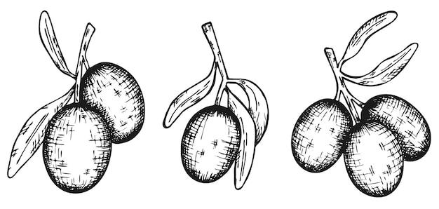 Ensemble d'olives dessinées à la main en vecteur