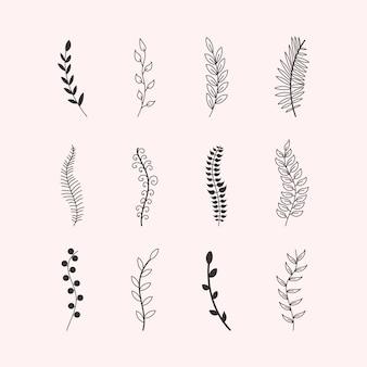 Ensemble d'ornements branches d'arbres eucalyptus, palmiers, feuilles, herbe. croquis fait main de feuilles d'éléments vintage, fleurs, tourbillons et plumes. éléments colorés dessinés avec une brosse à stylo. illustration.