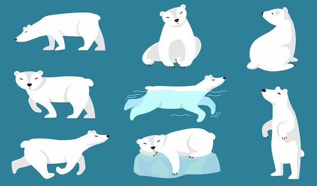 Ensemble ours polaire
