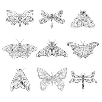 Ensemble de papillons de nuit vecteur papillons illustration dessinés à la main